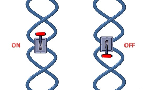 gene on and gene off