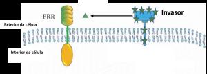 Proteínas de reconhecimento de patógeno