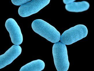 bactéria frozen