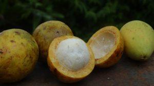 fruto de bacuri
