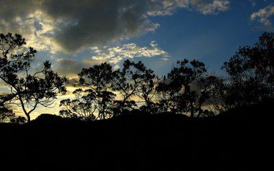 Sobre o zoneamento da cana-de-açúcar e biocombustíveis
