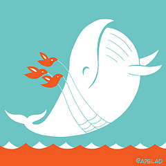 Encalhe de baleias – Uma visão crítica