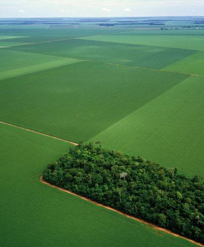 Mercado da biodiversidade: Valorando o meio ambiente