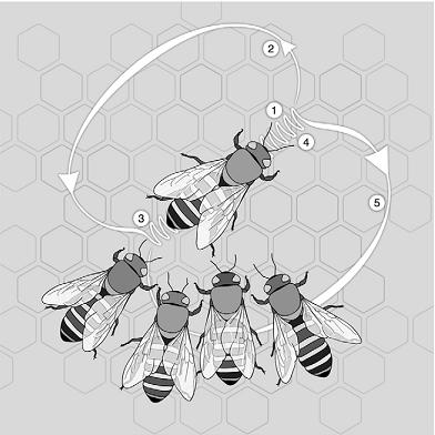 danca-abelhas-comunicacao.png
