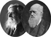 """Quem é o """"descobridor"""" da teoria da evolução?"""