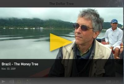 Brasil: A árvore de dinheiro