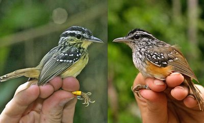 Espantando dois pássaros com uma nota só