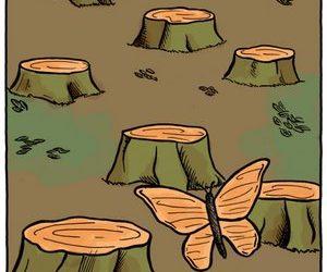 Descoberto novo padrão de camuflagem na Amazônia