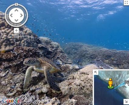 Conhecendo os recifes de corais sem sair de casa