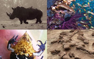 Nova coleção da PLoS: Impactos ecológicos da mudança climática