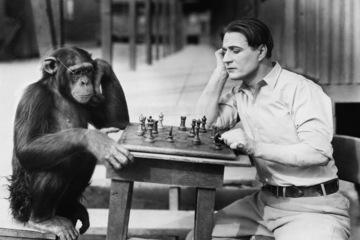 Suassuna e o chimpanzé: mais parecidos do que parecem