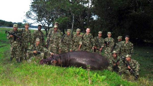 Animal abatido pelo exército