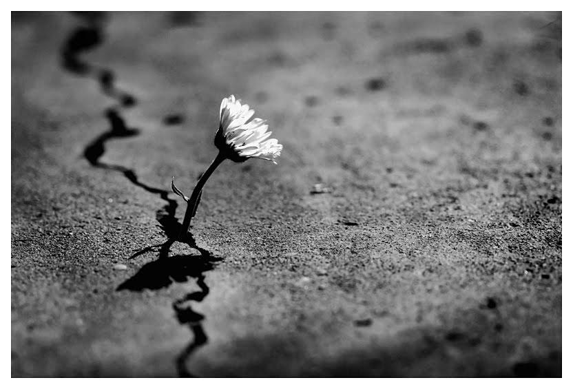Flor no deserto