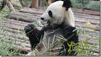 Chengdu (21)