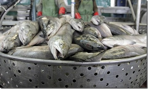 Salmon-009
