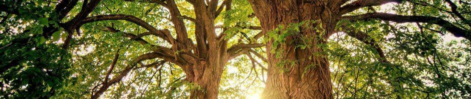 Foto de uma floresta com duas árvores e o sol ao fundo iluminando o espaço entre os troncos