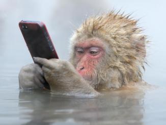 Onde eu vejo o número de contatos nestas redes sociais?