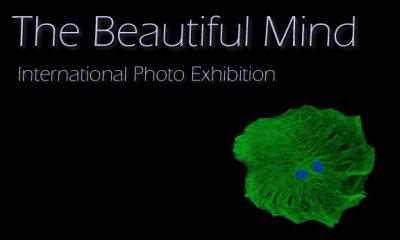fotografia neurociencia arte