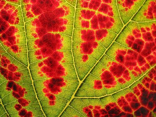 folhas-coloridas.jpg