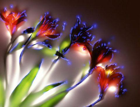kirlian flor 2