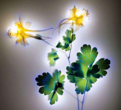 kirlian-flor-3.jpg
