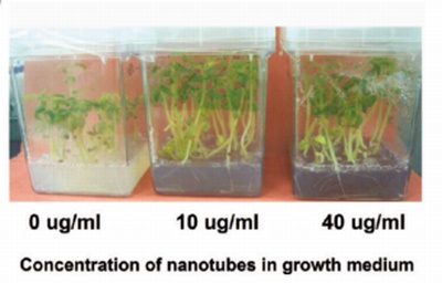tomates cultivados nanotubos carbono