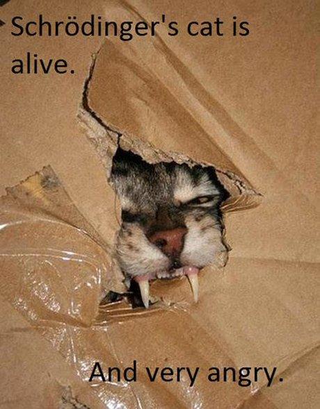 gato irritado na caixa de schoedinger