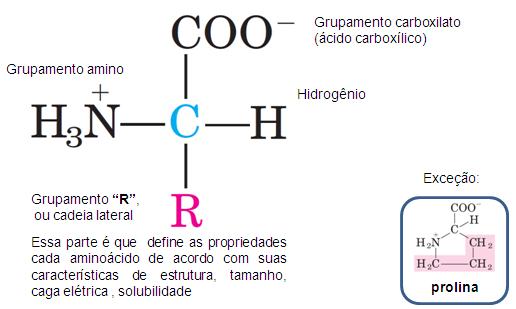 aminoacido