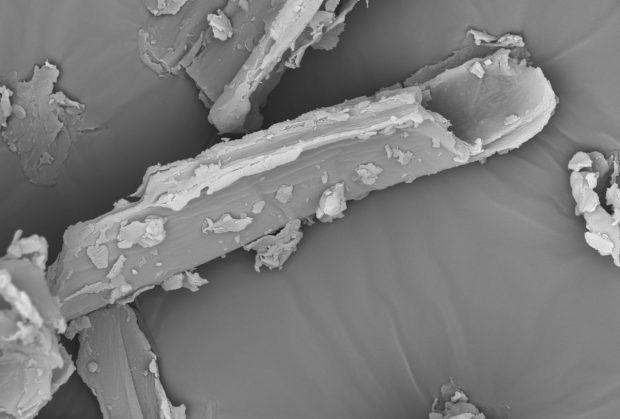 150615_Heupartikel_unter_Mikroskop