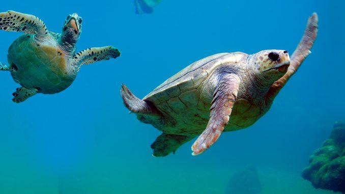Extinção de espécies aumenta em escala sem precedentes, alerta relatório do IPBES. Foto: Jornal da Unicamp