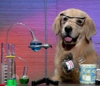 Apenas um cachorro em um experimento científico