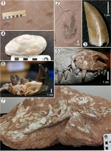Fósseis de SP