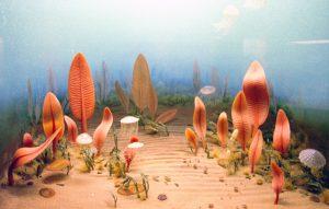 Figura 2: reconstituição paleoartística do que seria a Fauna de Ediacara. Vitrine do Smithsonian Museum, Washington, DC.