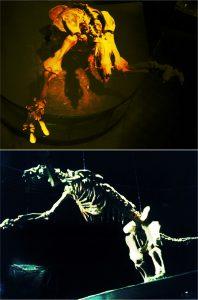 Diferentes vistas do esqueleto de uma preguiça gigante, exemplar exposto no Museu de Ciências Naturais - PUC Minas, Belo Horizonte, MG.