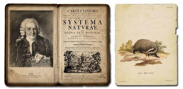 Systema Naturae, de Carlos Lineu (Carolus Linnaeus), no qual as espécies são classificadas hierarquicamente.