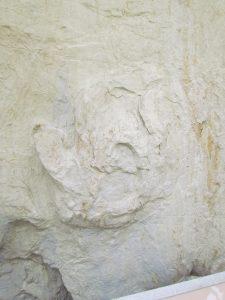 marca de pegada de Tiranossauro