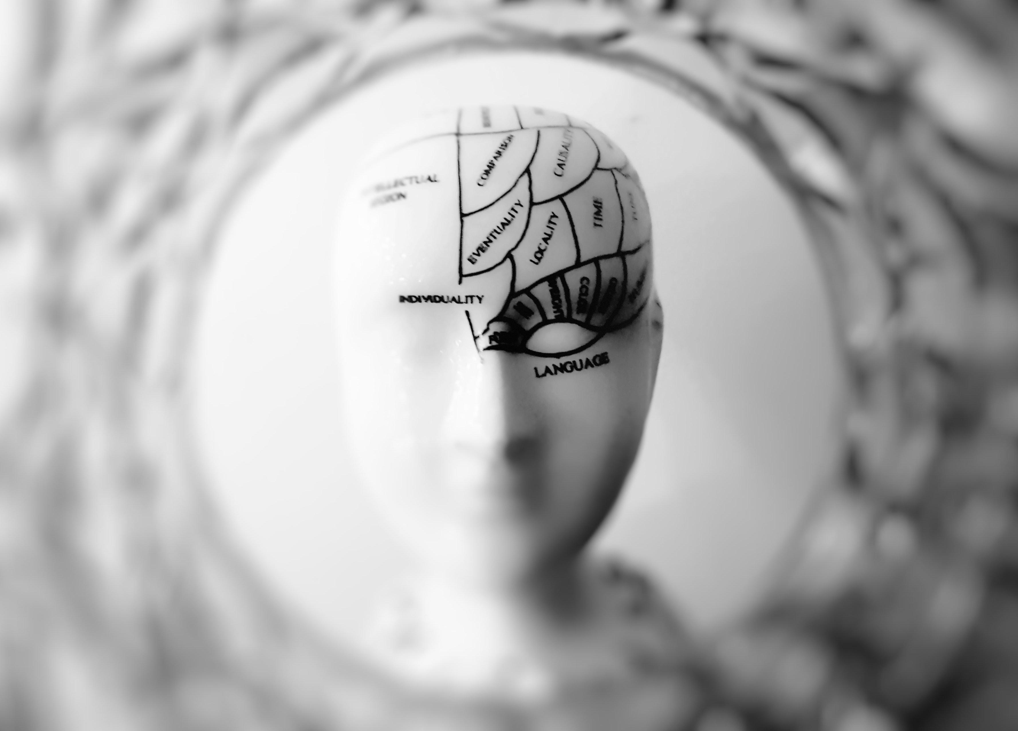 fake news no cérebro humano