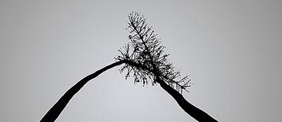 20090701_plants2.jpg