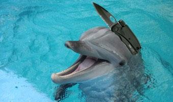 20130315_dolphin
