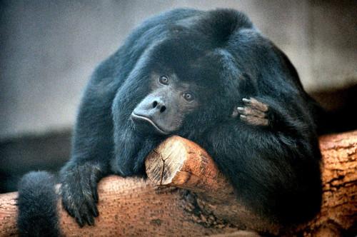 """Vaccinia em mamíferos silvestres: um caso de """"humanose"""""""