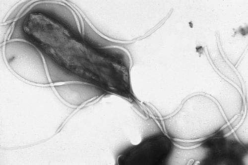 Cara, cadê minha bactéria?