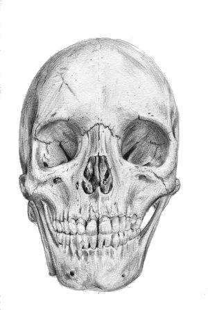 Skull_by_feliperibas03.jpg