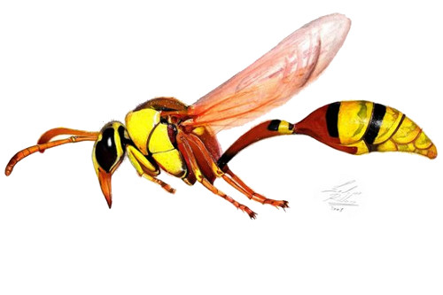 Wasp_by_feliperibas03.jpg