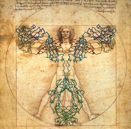 Estrutura do anticorpo sobreposta à obra de Leonardo da Vinci