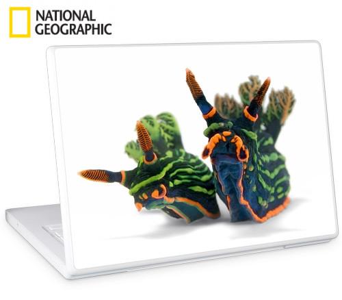 Adesivos para notebooks e eletrônicos da National Geographic