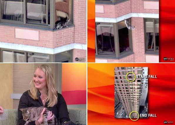 Gato sobrevive a queda de 26 andares