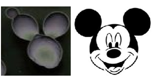 PB_Mickey