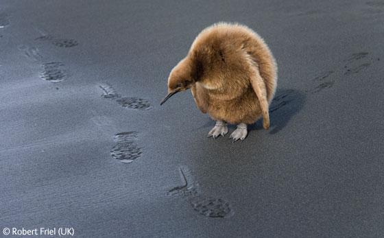 Wildlife_Photographer_01.jpg