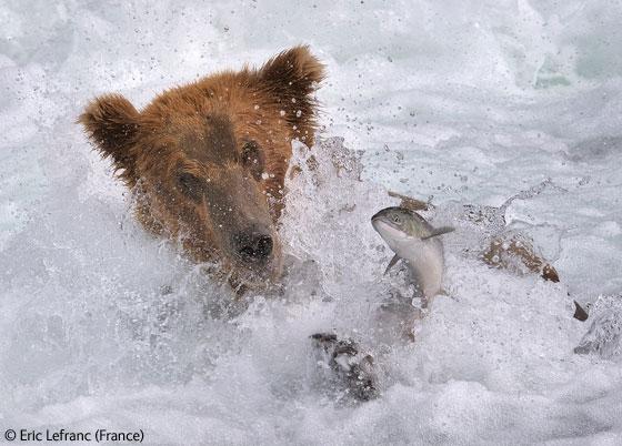 Wildlife_Photographer_03.jpg