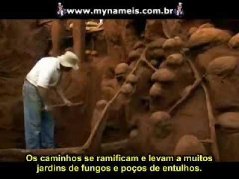 Do que as formigas são capazes